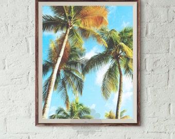 Palm Tree Print, tropical decor, palms, palm, california art, summer decor, modern print, palm trees photo, Palm Tree Photography, palms