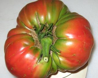 Epstein's Potato Leaf Heirloom Tomato Seeds