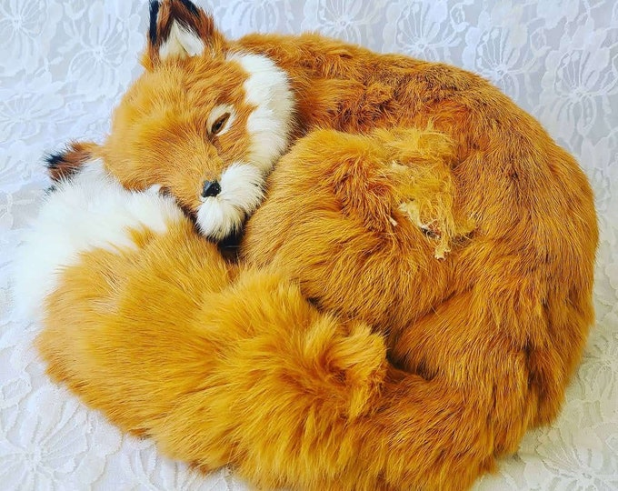 NO Reserves REAL Taxidermy Young Red Adirondack Fox with White Tipped Tail ~ Collectible Specimen Oddities Decor ~ Sold As-Is
