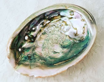 """Extra Large Unpolished Natural Abalone Seashell 8"""" by 6""""~ Huge Seashell ~ Vintage Shell ~ Shell Soap Ring Dish ~ Smudging Etc"""