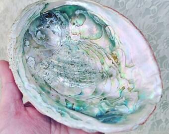 Large Unpolished Natural Abalone Seashell 6.25 Inches Long ~ BIG Seashell ~ Vintage Shell ~ Shell Soap Ring Dish ~ Beach Coastal Decor