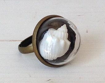Adjustable ring with glass dome and shell