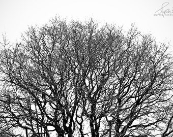 Abstract Print Minimalist Tree Nature Photography Black Etsy