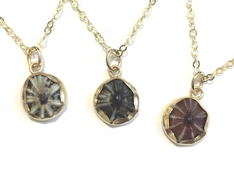 Opihi Necklace- READY TO SHIP