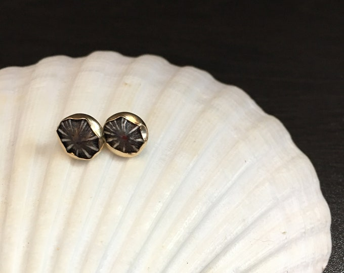 Gold Filled Opihi Studs