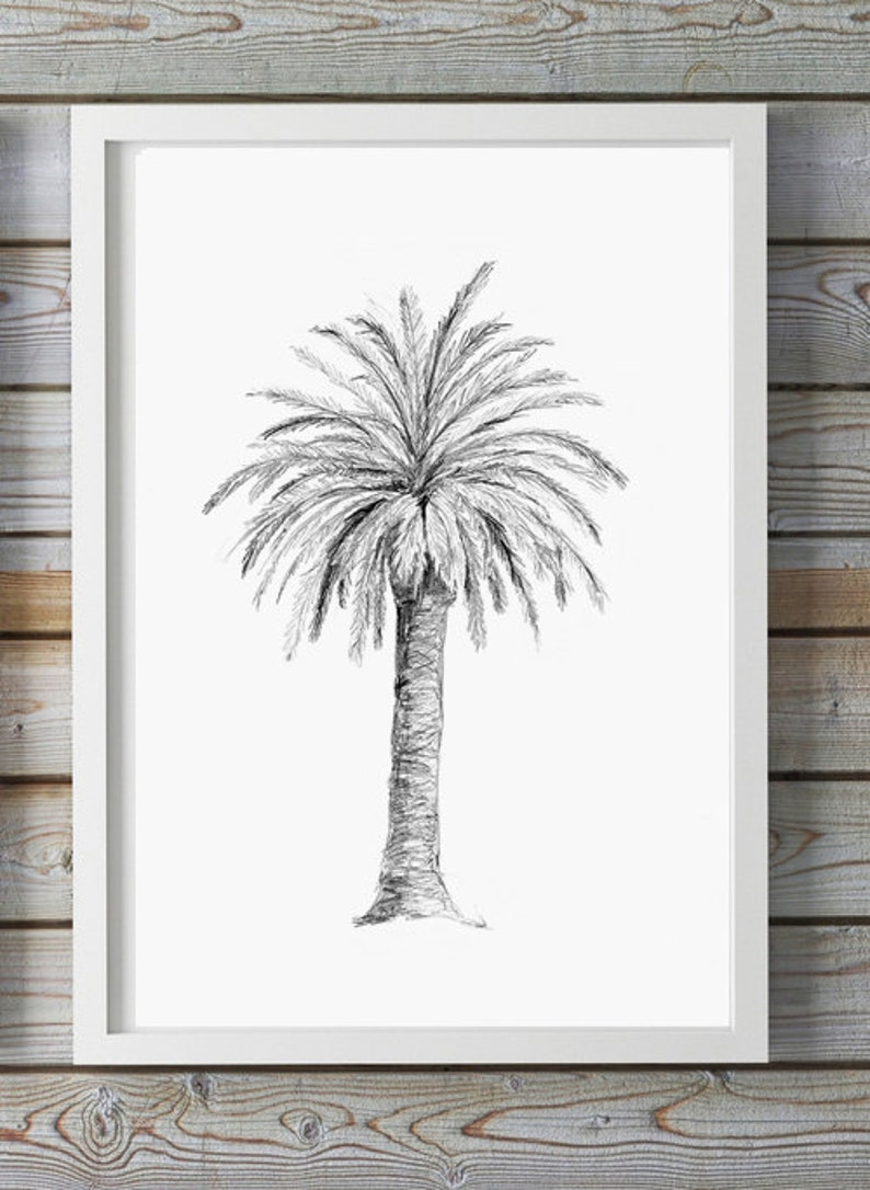 Palm tree art pencil drawing giclee print palm decor tree sketch pencil zen drawing palmtree illustration