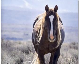 """Wild Stallion Mateo 2""""x 2"""" Magnet - Sand Wash Basin Wild Horse, mustang magnet, liver chestnut wild mustang, northwest Colorado"""