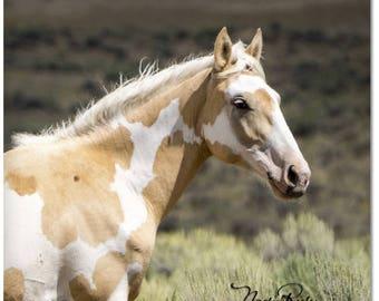 "Palomino Pinto Mustang 2""x 2"" Magnet - Sand Wash Basin Wild Horse Meteor, mustang magnet, palomino paint, northwest Colorado"
