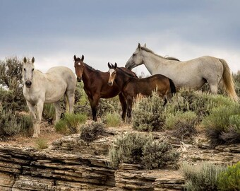 Wild Mustang Family Band on a Rock Ledge in Sand Wash Basin, Wild Horse Photography, Casper's Band, wild horses, mustangs, foal, colt