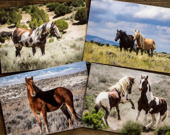 Sand Wash Basin Icons 5x7 Cards - Set of 4, Picasso, Corona, Ruby, Tango and War Horse and Free Shipping, wild horses, mustangs