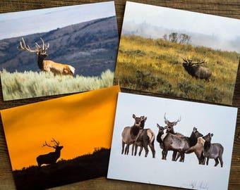Elk 5x7 Cards - Set of 4, Bull Elk Bugling, Bull Elk in Velvet, Bull Elk Sunset Silhouette, Elk in Snow, Fog, Northwest Colorado, Wyoming