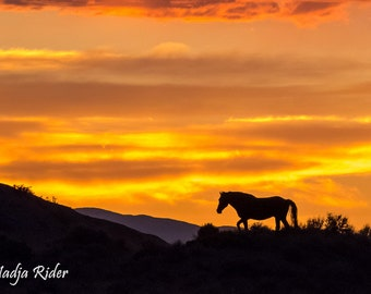 Mustang Silhouette Against a Blaze Orange Sky in Sand Wash Basin - Fine Art Wild Horse Photography Print, sunset horse silhouette, orange