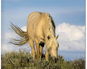 "Palomino Wild Horse 2""x 2"" Magnet - Sand Wash Basin Wild Mustang Stallion Bobby, mustang magnet"