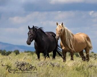 "Corona and Em Magnet 3""x4"" - Sand Wash Basin Wild Mustang Stallion, palomino stallion, black mare"