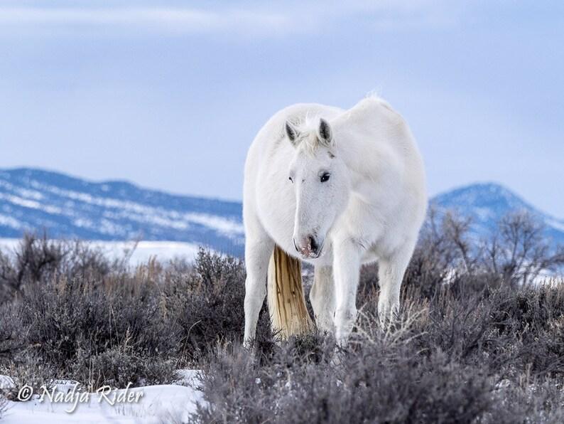 Wild Mustang 10x14 Metal Print  Wild Horse Mystic wild image 0