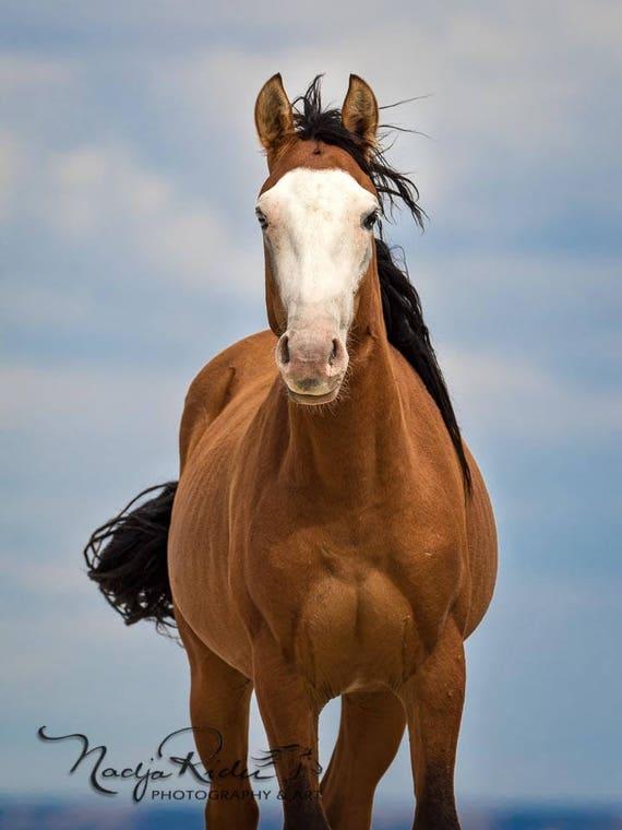 Get Mustang Stallion