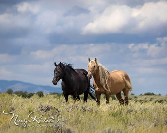 Golden Maned Corona with his Black Mare Em of Sand Wash Basin, Wild Horse Photography, wild horses, palomino wild mustang, wild stallion