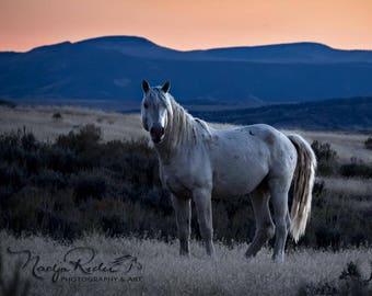 Tripod Wild Stallion of Sand Wash Basin, Wild Horse Photography, wild horses, cremello wild mustang, wild stallion sunset