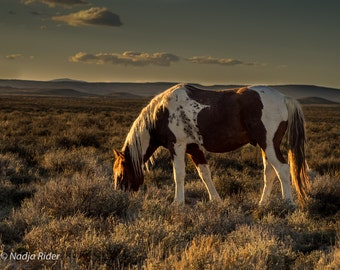 Tango in the Sunset - Wild Mustang of Sand Wash Basin - Fine Art Wild Horse Photography Print, wild horse at sunset, Northwest Colorado
