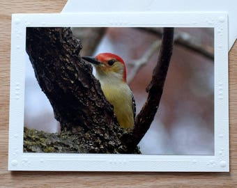 Blank Notecard Card; Red Bellied Woodpecker on 5x7 Blank Greeting Card; Embossed Blank Notecard; Bird Notecard; All Occasion Card