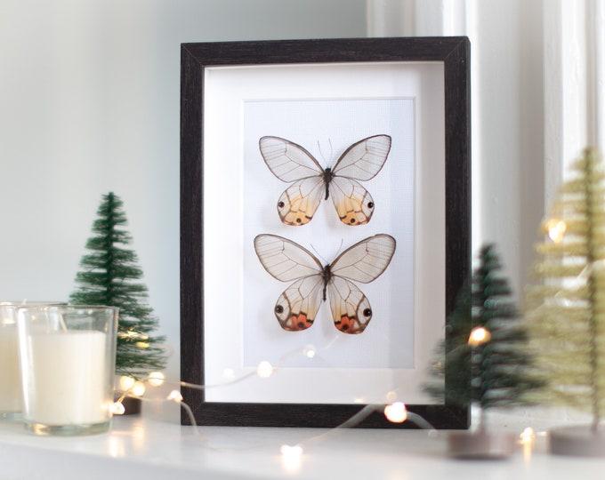 Featured listing image: Framed amber phantoms, Haetera piera