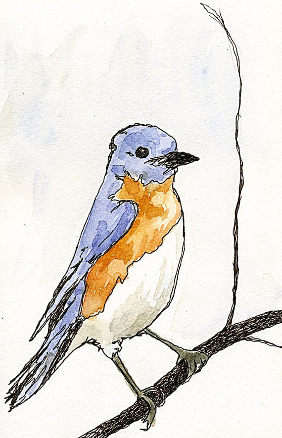 Bluebird Art Print Watercolor With Pen And Ink Wall Art Print Illustration Painting Drawing