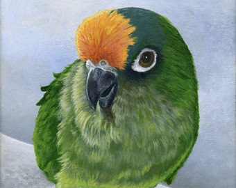 Custom Pet Portrait of your Pet, Bird Portrait, Bird Painting, Parrot Painting, Animal Gift, 8x10 on Canvas