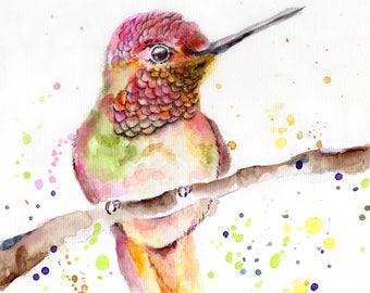 Small Multicolor Colibri