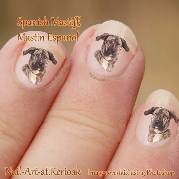 Spanish Mastiff Nail Stickers Mastin Espanol Brindle And Etsy