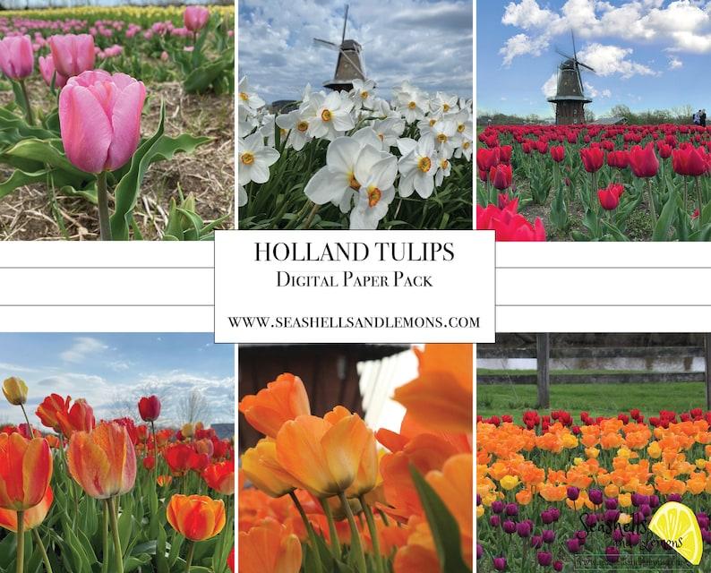 Digital Paper  Holland Tulips  Spring Tulip Flower Paper  image 0