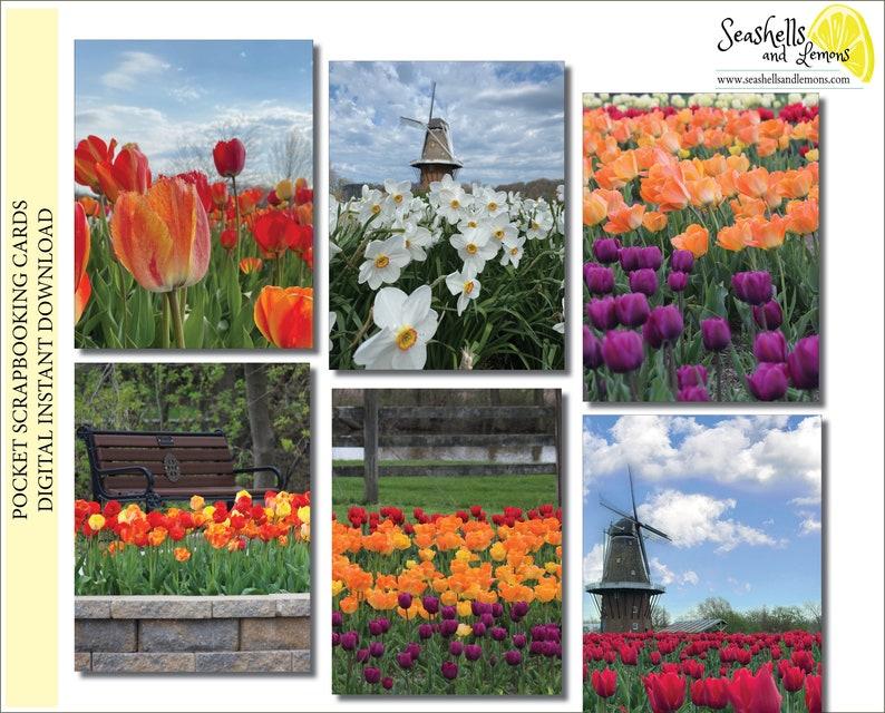 Tulips from Holland Pocket Life Travel Cards Pocket image 0