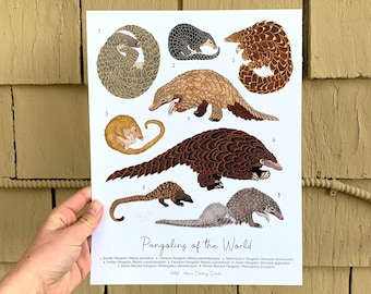 """Poster: Pangolins Of The World - 8.5x11"""" - 100% Recycled Paper - Eco-Friendly Inks - Nature Poster"""