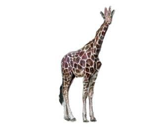 Watercolor Giraffe Print, Giraffe Art Print