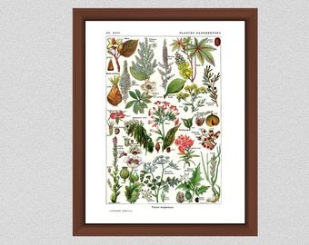 Plantes Dangereuses Art Print from LaRousse French Dictionary - Art by Demoulin Dangerous Plants Print - Home Decor - Botanist Gift Idea
