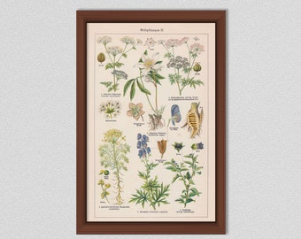 Poisonous and Toxic Plants Plants Art Print, Vintage German Poisonous Plants Poster, Giftpflanzen Art Print - Botanist Gift Idea - German