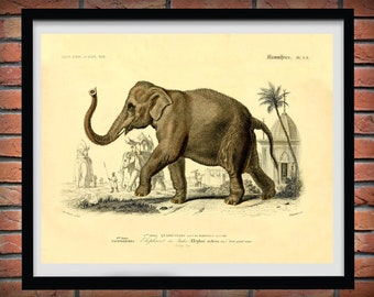 1857 Elephant Art Print, 1857 Edouard Traviès Indian Elephant Poster, Giclee Print, Travies Reproduction, Mammifers and Pachydermes Print