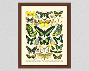 Vintage French Butterfly Art Print #1, Millot Butterfly Poster, French Butterflies Poster, Larousse Papillons, Home Decor, Lepidopterology