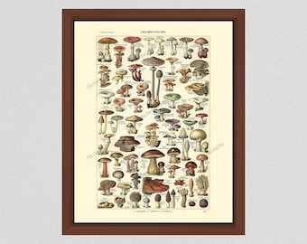 Vintage Mushroom Art Print #1, Art by Millot, French Mushroom Poster, Mushroom Art Print, Larousse Mushroom Illustration, Mushroom Wall Art