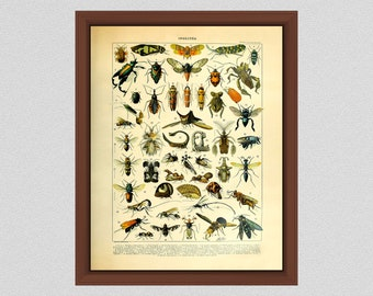 Vintage Insect Art Print #1, Art by Millot for Larousse Petit Dictionnaire, Entomologist Gift Idea, Study of Insects, Science-Biology Decor