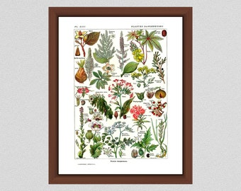 1912 Vintage Dangerous Plants Art Print, French Larousse Poisonous Plants, Plantes Dangereuses Art Print - Home Decor - Botanist Gift Idea