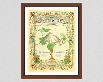 1882 Thomas Gentry Nest and Eggs of the Birds of the United States Art Print, Vintage Bird Wall Art, Published by J.A. Wagenseller