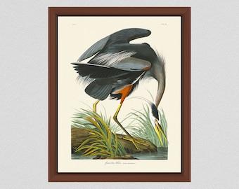 Great Blue Heron Art Print by John James Audubon, Blue Heron Illustration, Audubon Bird Print Birds of America, Wildlife Wall Art Bird Art