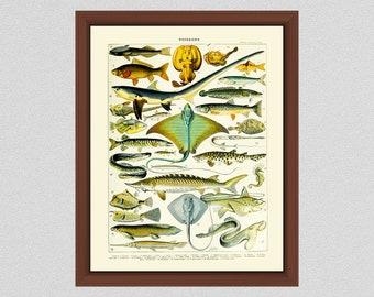 Vintage Poisonous Fish Art Print, French Larousse Poisonous Fish Art Print, Adolphe Millot Art Print , LaRousse Dictionaire, Dangerous Fish