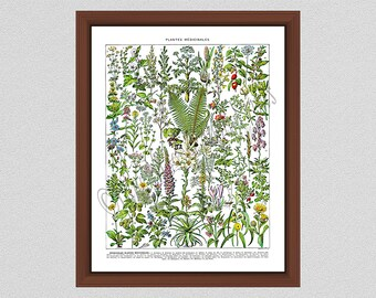 Vintage Medicinal Plant Art Print, Adolphe Millot Plantes Medicinales Art Print, Larousse Medicinal Plant Poster, Medical Herbs Poster