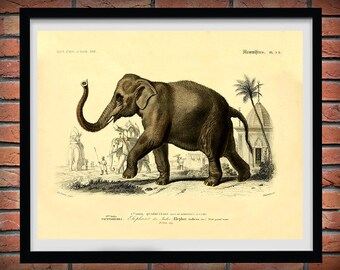 1857 Elephant Art Print, Edouard Traviès Indian Elephant Poster, elephant Giclee Print, Travies Reproduction, Mammifers Pachydermes Print
