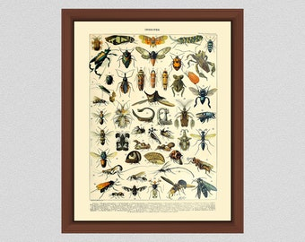Vintage Insects Art Print #1, French Insect Art by Adolphe Millot, Study of Bugs, Entomologist Gift, Study of Insects, Larousse Insects Art