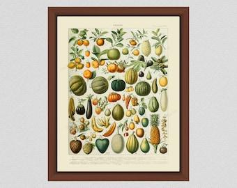 Adolphe Millot Fruit Print, Larousse French Fruit Poster, Vintage Fruit Print, Adolphe Millot Fruits Poster, Kitchen Decor, French Wall Art