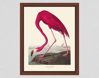 Vintage Pink Flamingo Print by John James Audubon, Flamingo Illustration, Audubon Bird Print Birds of America, Wildlife Wall Art Bird Art