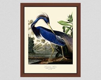 Louisiana Heron Art Print #2 by John James Audubon, Blue Heron Illustration, Audubon Bird Print Birds of America, Wildlife Wall Art Bird Art