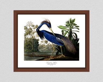 Louisiana Heron Art Print #1 by John James Audubon, Blue Heron Illustration, Audubon Bird Print Birds of America, Wildlife Wall Art Bird Art